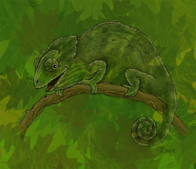 chameleon_RbairdFC72