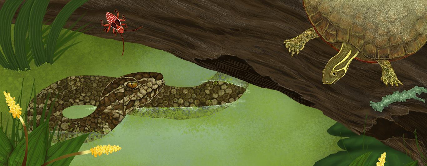 Swamp_RobertaBaird