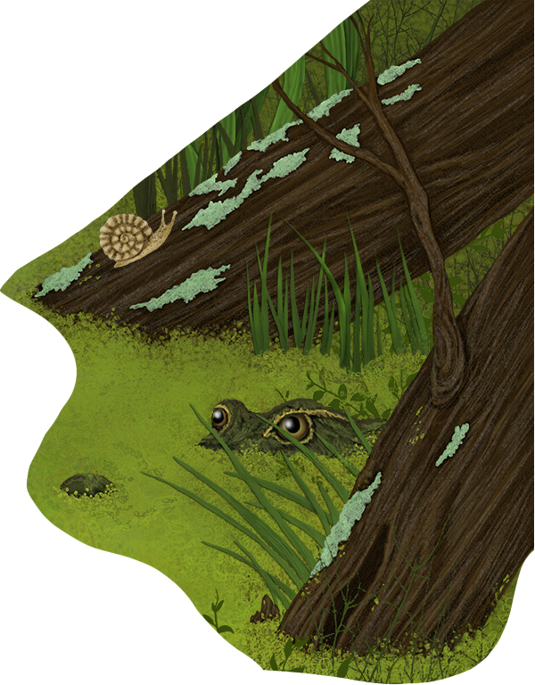 hiding gator